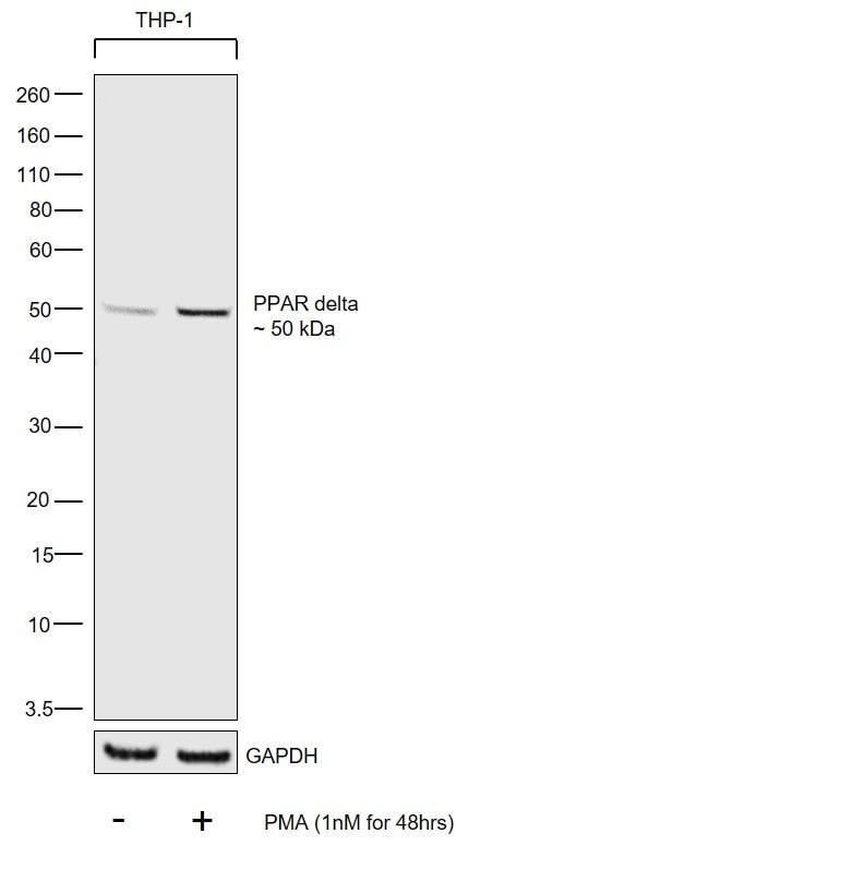 PPAR delta Antibody in Cell treatment