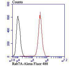 RAB7A Antibody in Flow Cytometry (Flow)