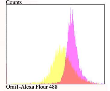ORAI1 Antibody in Flow Cytometry (Flow)