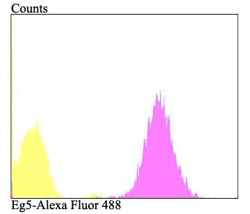 KIF11 Antibody in Flow Cytometry (Flow)