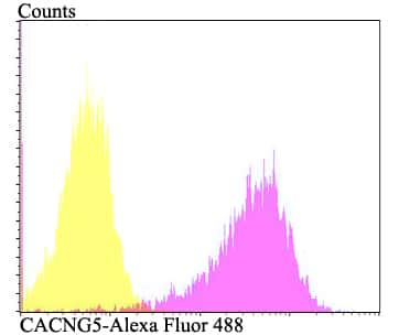 CACNG5 Antibody in Flow Cytometry (Flow)