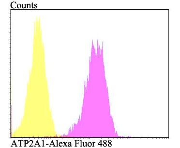 ATP2A1 Antibody in Flow Cytometry (Flow)