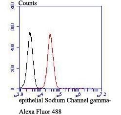 gamma-ENaC Antibody in Flow Cytometry (Flow)
