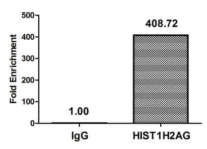 Acetyl-Histone Macro-H2A.1 (Lys36) Antibody in ChIP assay (ChIP)