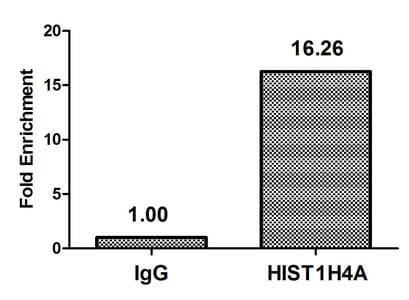 2-hydroxyisobutyryl-Histone H4 (Lys16) Antibody in ChIP assay (ChIP)