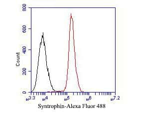 Syntrophin alpha-1 Antibody in Flow Cytometry (Flow)
