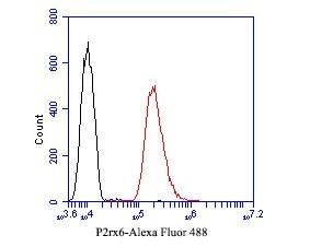 P2X6 Antibody in Flow Cytometry (Flow)