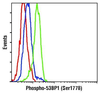 Phospho-53BP1 (Ser1778) Antibody in Flow Cytometry (Flow)