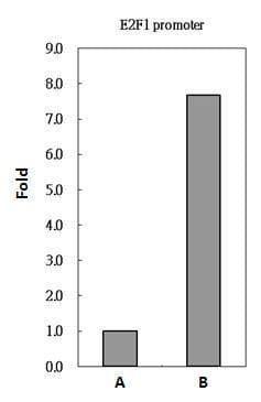 PAX8 Antibody in ChIP assay (ChIP)