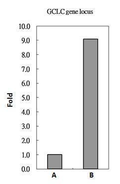 Nrf2 Antibody in ChIP assay (ChIP)