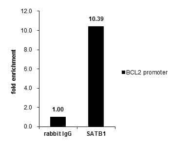 SATB1 Antibody in ChIP assay (ChIP)