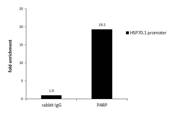PARP1 Antibody in ChIP assay (ChIP)