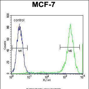 PCDH20 Antibody in Flow Cytometry (Flow)