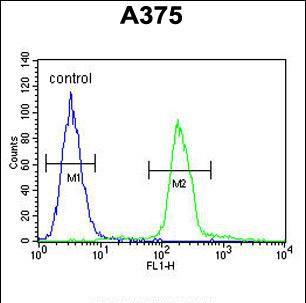 Transthyretin Antibody in Flow Cytometry (Flow)