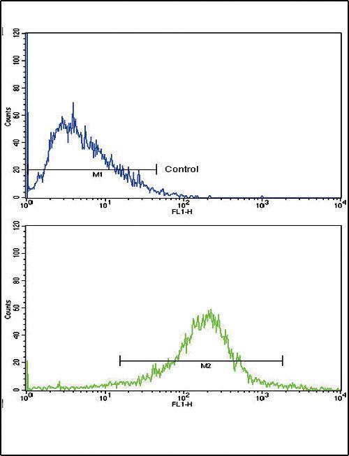 RAP Antibody in Flow Cytometry (Flow)