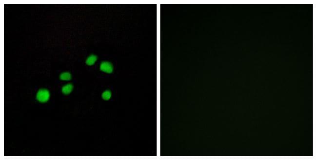COL23A1 Antibody in Immunofluorescence (IF)
