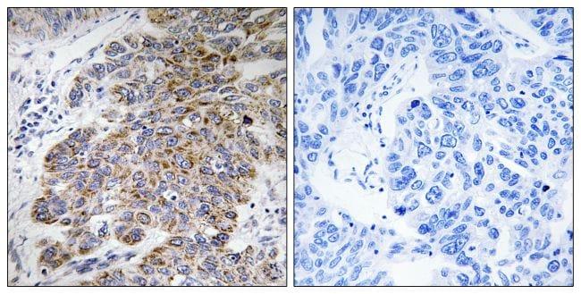 CHST10 Antibody in Immunohistochemistry (Paraffin) (IHC (P))