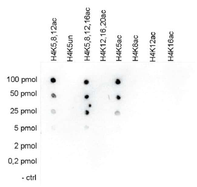 Acetyl-Histone H4 (Lys5) Antibody in Peptide Array (ARRAY)