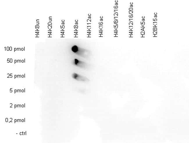 Acetyl-Histone H4 (Lys8) Antibody in Peptide Array