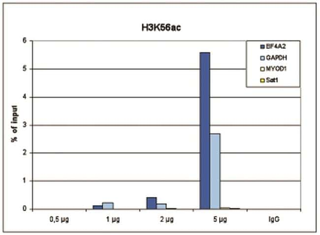 Acetyl-Histone H3 (Lys56) Antibody in ChIP assay (ChIP)