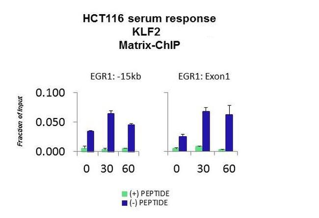 KLF2 Antibody in ChIP assay (CHIP)