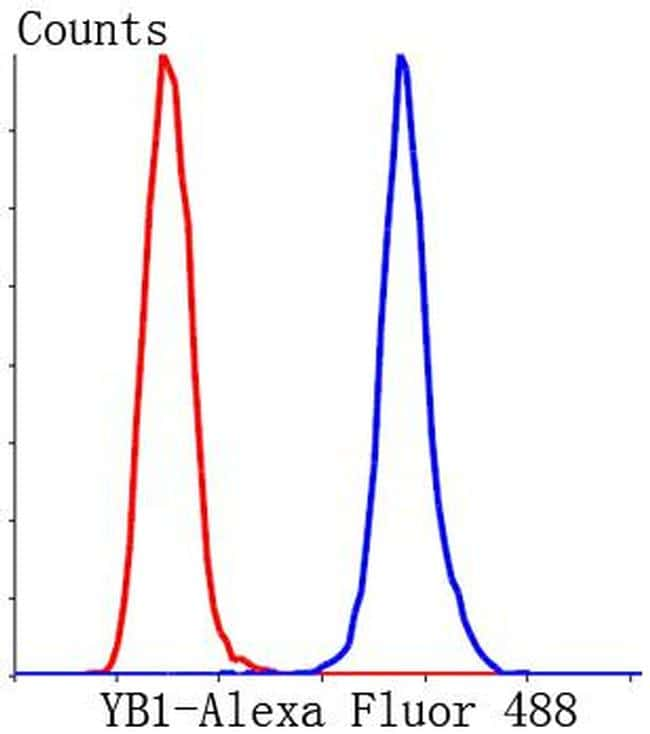YBX1 Antibody in Flow Cytometry (Flow)