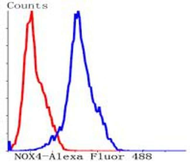 NOX4 Antibody in Flow Cytometry (Flow)