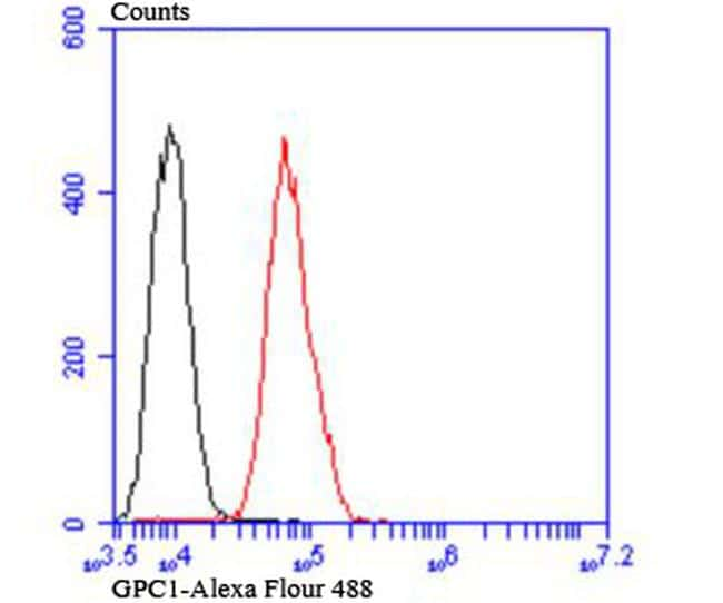 Glypican 1 Antibody in Flow Cytometry (Flow)