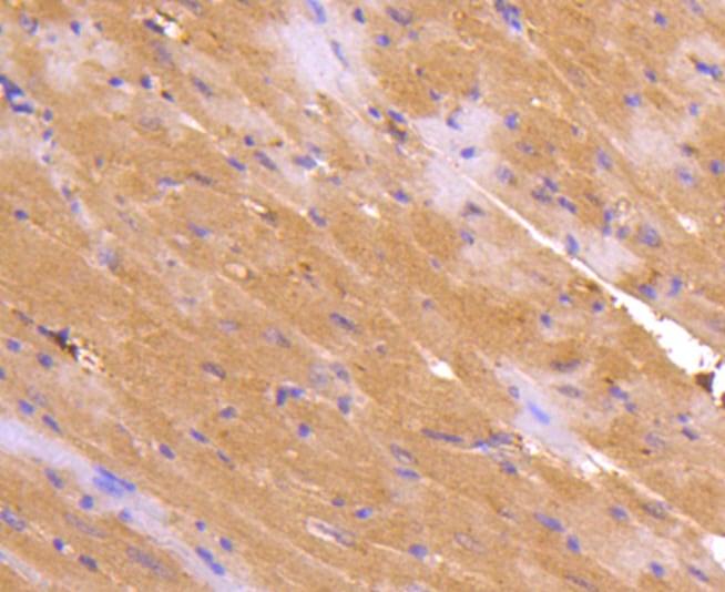 TNFRSF11B Antibody in Immunohistochemistry (Paraffin) (IHC (P))