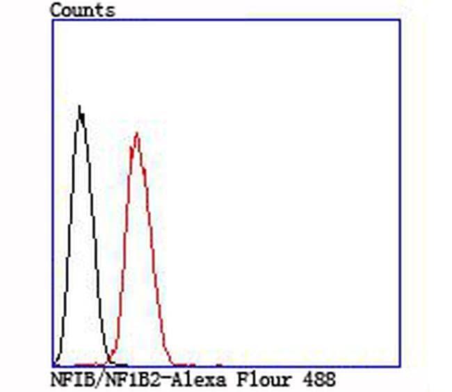 NFIB Antibody in Flow Cytometry (Flow)