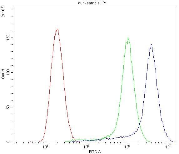 CYP1B1 Antibody in Flow Cytometry (Flow)