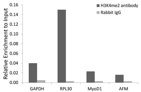 Di-Methyl-Histone H3 (Lys4) Antibody in ChIP assay (ChIP)