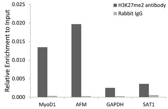 Di-Methyl-Histone H3 (Lys27) Antibody in ChIP assay (ChIP)