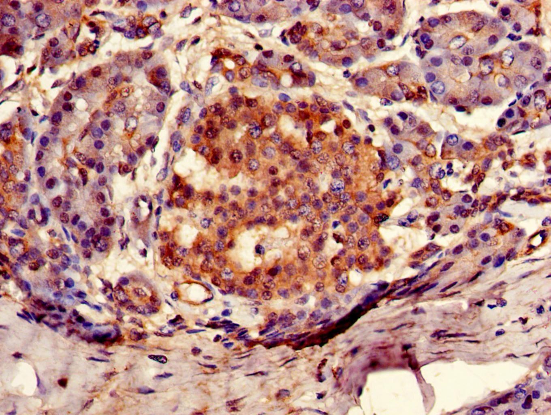 Arylsulfatase G Antibody in Immunohistochemistry (Paraffin) (IHC (P))