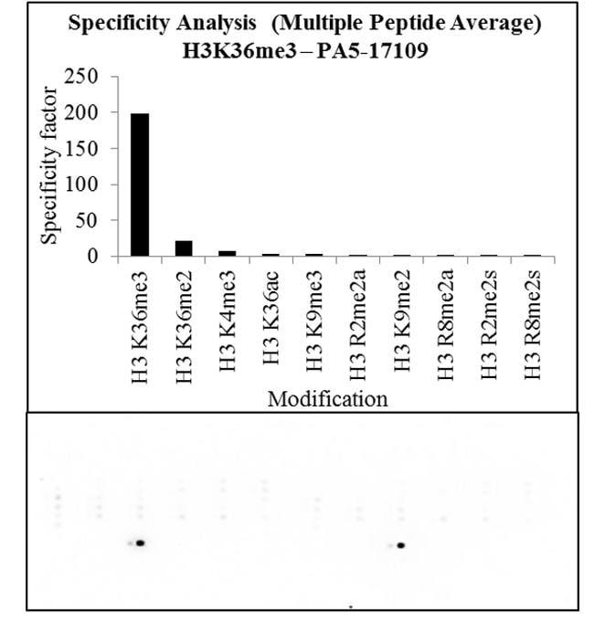 Tri-Methyl-Histone H3 (Lys36) Antibody in Peptide Array (ARRAY)