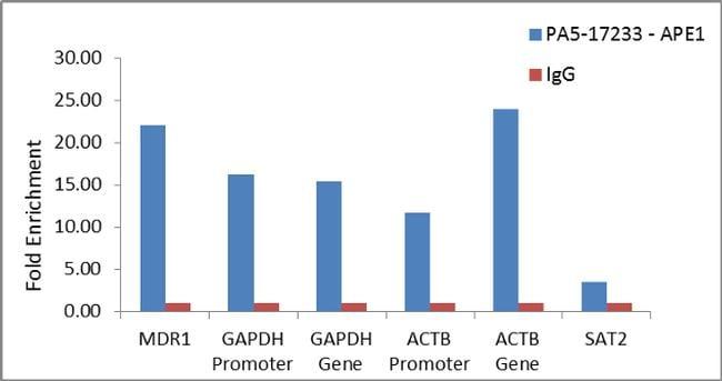 APE1 Antibody in ChIP assay (ChIP)