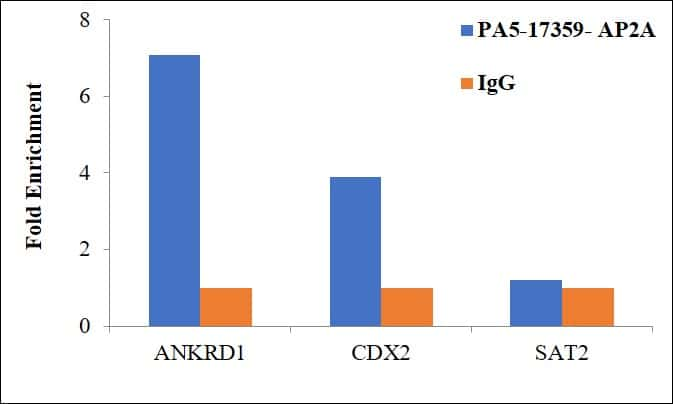 AP2 alpha Antibody in ChIP assay (ChIP)