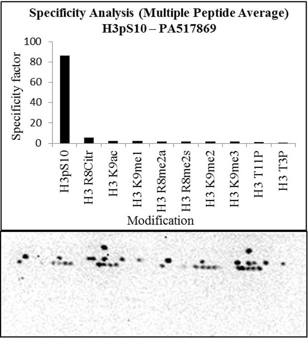 Phospho-Histone H3 (Ser10) Antibody in Peptide array