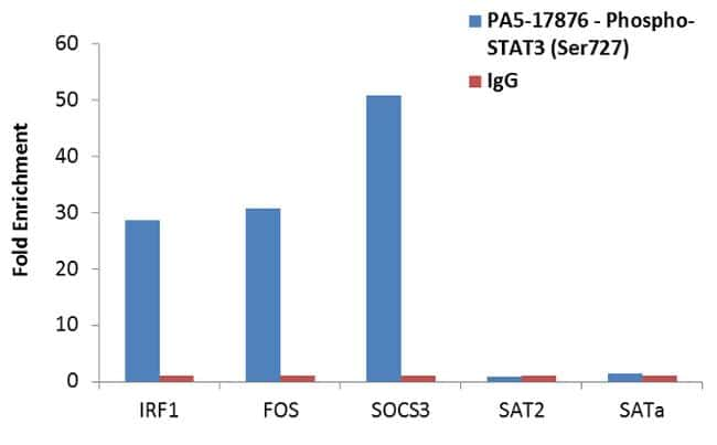 Phospho-STAT3 (Ser727) Antibody in ChIP assay (ChIP)