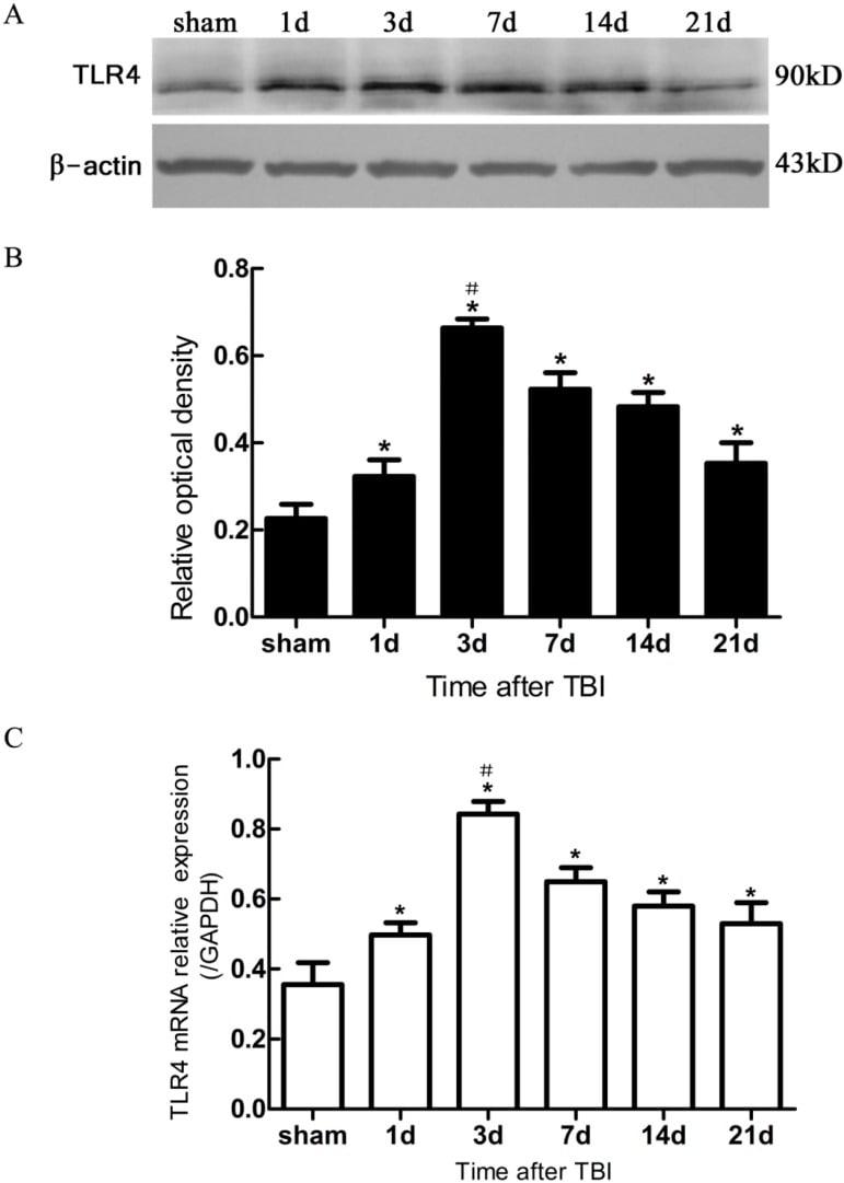 TLR4 Antibody