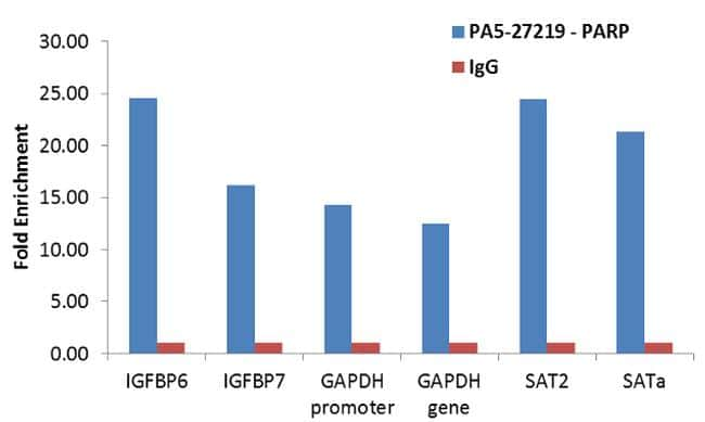 PARP Antibody in ChIP assay (ChIP)