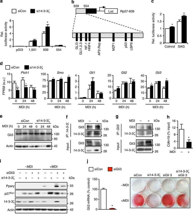 GLI3 Antibody