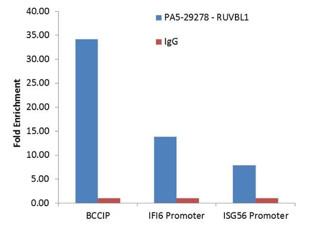 RUVBL1 Antibody in ChIP assay (ChIP)