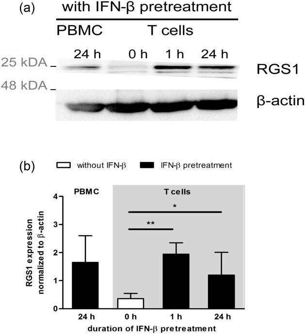 RGS1 Antibody
