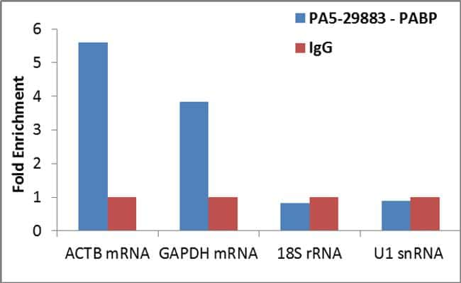 PABP Antibody in Relative expression