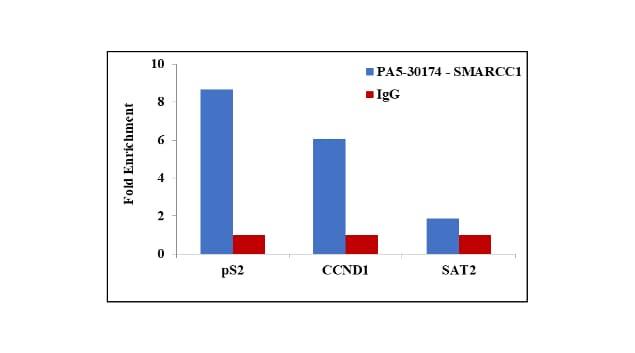 SMARCC1 Antibody in ChIP assay (ChIP)
