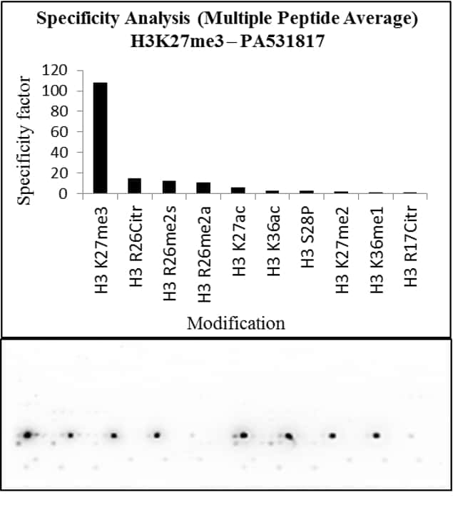 H3K27me3 Antibody in Peptide array (Array)