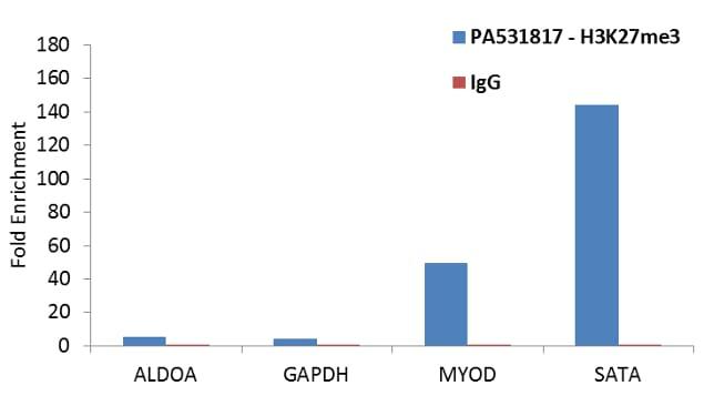 Tri-Methyl-Histone H3 (Lys27) Antibody in ChIP assay (ChIP)