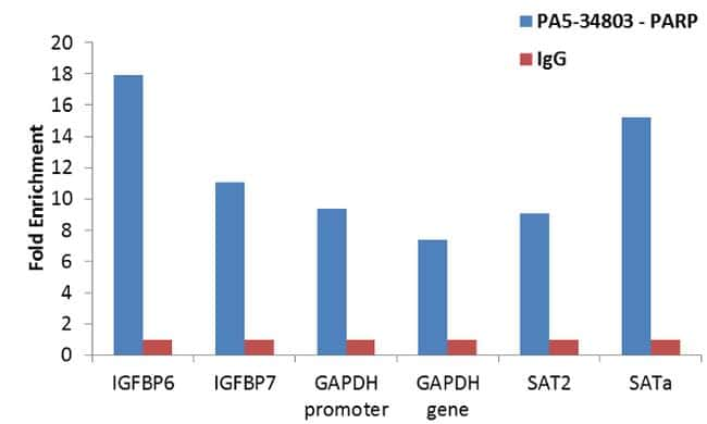 PARP Antibody in Relative expression