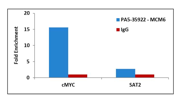 MCM6 Antibody in ChIP assay (ChIP)